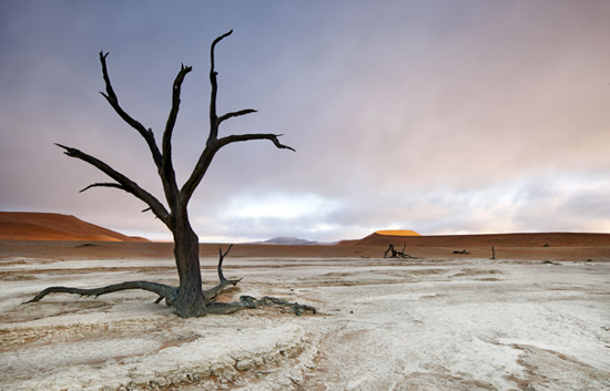 Scorched black trees of Deadvlei